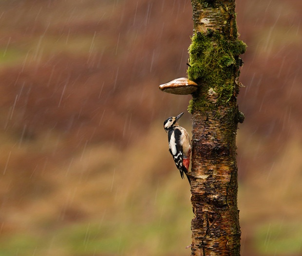 natural-umbrella-shelter-rain-animal-photography-5__880